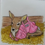 Deirdre_pink jacket_coloring book