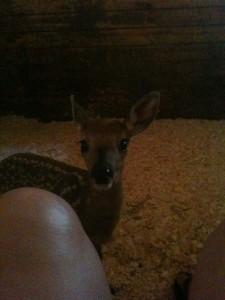 Deirdre, 1-2 days old