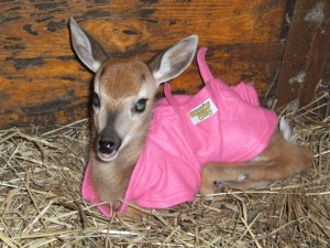 Deirdre in her pink coat.